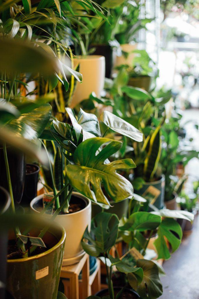 Plant hire and maintenance - Lygon St Nursery